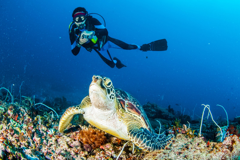 Top 6 Popular Diving Destinations in Malaysia