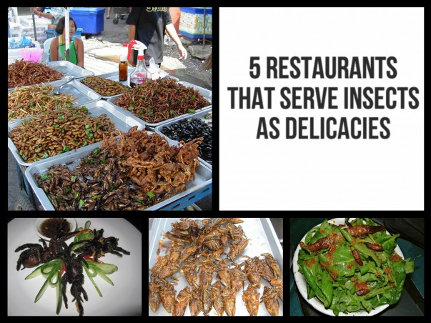 5 Restaurants around the world that serve Insects as delicacies