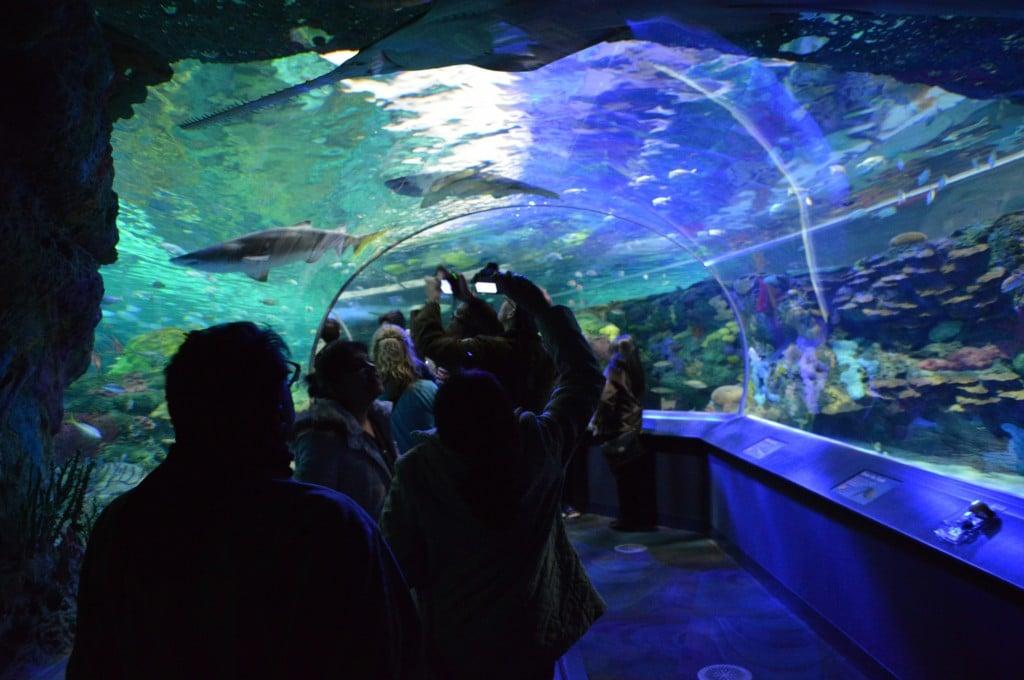 Ripley's Aquarium, Toronto, Canada | Photo Gallery