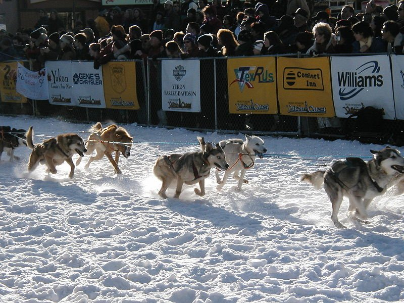 Watch the Sled Dog Race at Alaska
